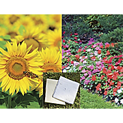 Set of 2 Flower Seed...