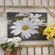 outdoor daisy print on canvas