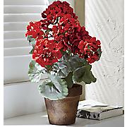potted geranium