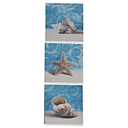 set of 3 seashell prints