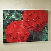 outdoor geranium print