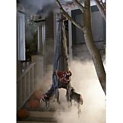 hanging rabid bat