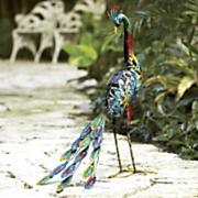 solar peacock