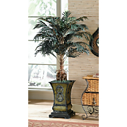 Cycas Palm in Planter