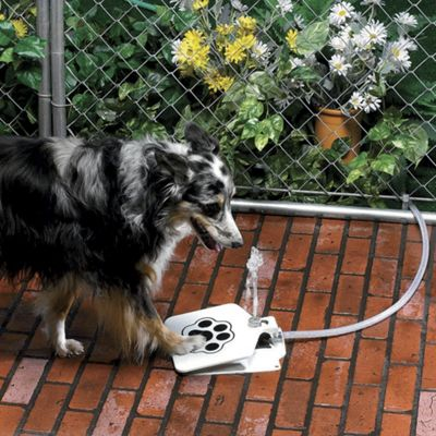 Fresh Water Doggie Fountain