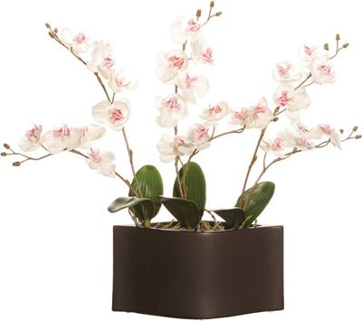 White Orchids in Black Pot