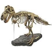 3 foot t rex skeleton