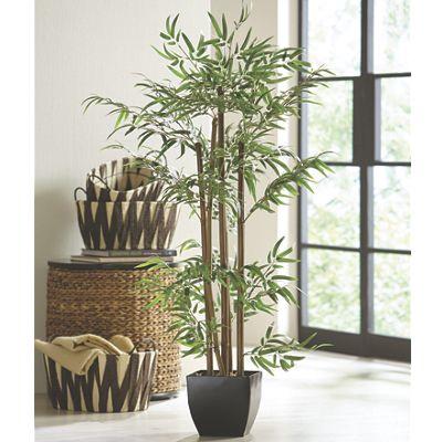 Bamboo Tree from Midnight Velvet VI718509