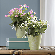 set of 2 sweet william planters