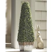 boxwood planter