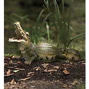 solar crocodile 171