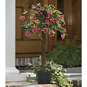 lighted azalea tree