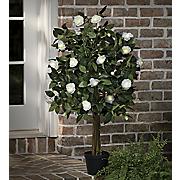 lighted white rose tree
