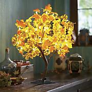 lighted autumn maple tree