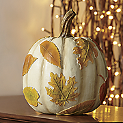 white leaves pumpkin