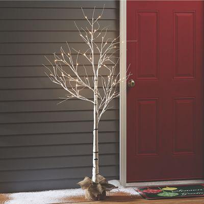 Lit Birch Tree