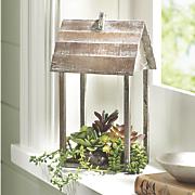 succulent home