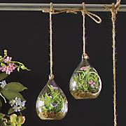 set of 2 small terrariums