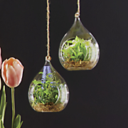 set of 2 large terrariums