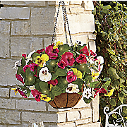 lighted pansy hanging basket