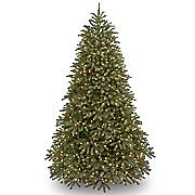 7.5' Feel-Real Jersey Fraser Fir Tree