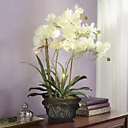 lighted ivory orchid
