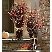 orange bittersweet bush