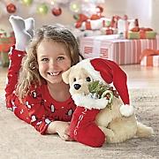 Dasher The Dog