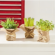 set of 3 burlap potted herbs