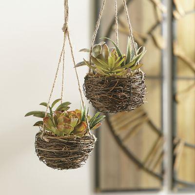 Set of 2 Hanging Succulents
