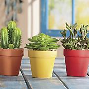 3 pc  sonoran plant set