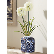 allium in vase