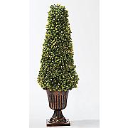 26 quot  boxwood cone