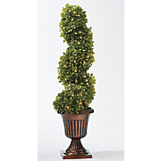 26 quot  boxwood spiral