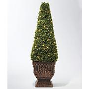 36 quot  boxwood cone
