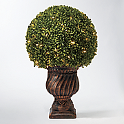 27 quot  boxwood round shrub
