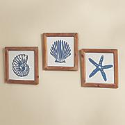 set of 3 seashell prints 50