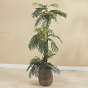 palm tree in basket