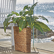 tropical plant in basket