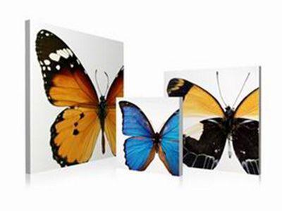 3-Piece Butterfly Wall Art