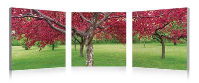 3-Piece Cherry Blossom Wall Art