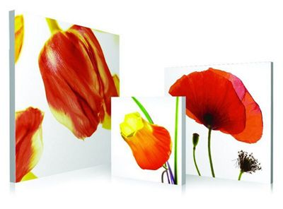 3-Piece Poppy Floral Wall Art