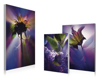 3-Piece Purple Floral Wall Art