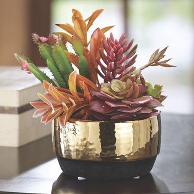 Succulents in Round Ceramic Pot
