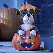 lighted pumpkin pup