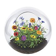 Wildflower Garden Terrarium