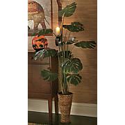 Split Leaf Philo Floor Plant