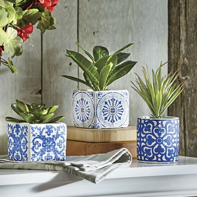 Set of 3 Succulents in Printed Pot