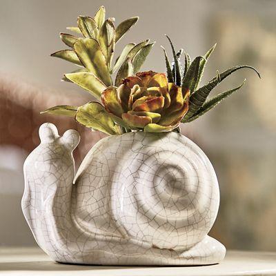 Succulent Snail