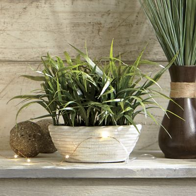 Grass in Oval Pot